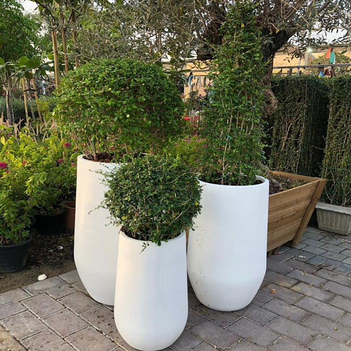 Plant Pots and Containers